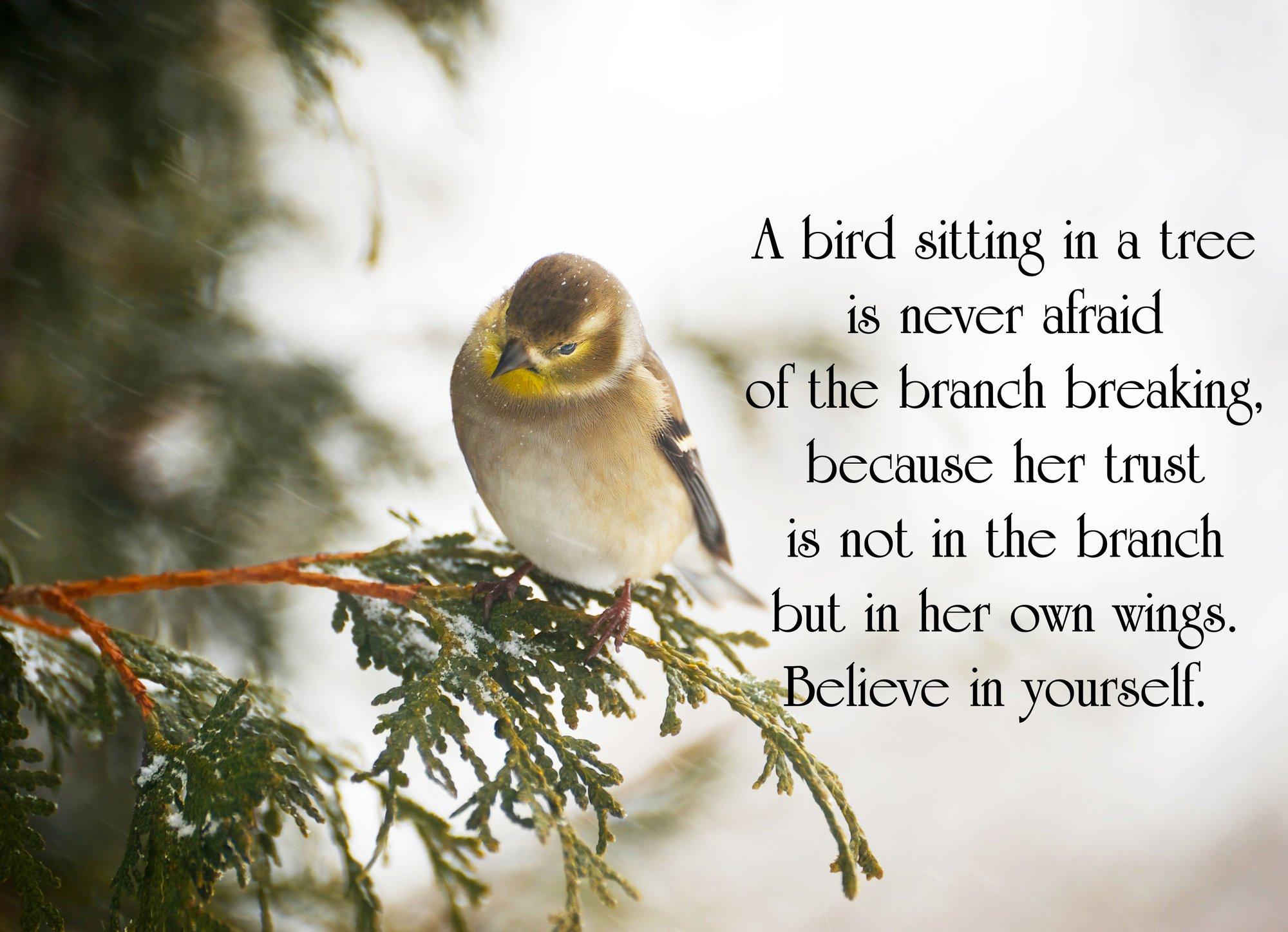 A bird sitting in a tree - Believe in Yourself