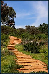 The_winding_path_by_tinyfroglet_flickr_commons
