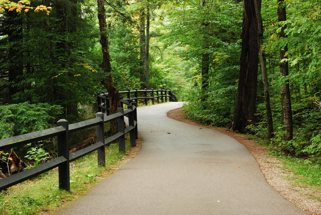 Coaching Success Woods_Path_by_E_Bass_Creative_Commons_License-1.jpg